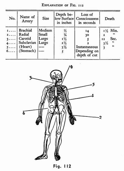 肾脏解剖手绘图